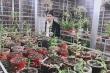 Chàng trai 8X Nam Nguyễn 'dành cả thanh xuân' để yêu hoa lan