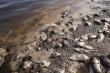 Ô nhiễm nguồn nước, cá chết trắng hồ thủy lợi Huế