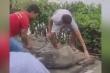 Video: Người dân bắt cá sấu sổng chuồng ở miền Tây