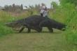 Cá sấu khổng lồ 'to như khủng long' thản nhiên băng qua đường ở Florida