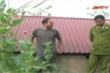 Trồng cây thuốc phiện trên sân thượng