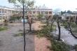 Nhiều trường chặt hạ hàng loạt cây phượng 'vô tội vạ', cộng đồng mạng xót xa