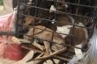 Ăn thịt chó, nhóm lao động Việt ở Đài Loan bị phạt gần 800 triệu đồng