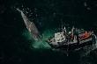 Cá voi xanh vất vả né hàng trăm tàu khi đi kiếm ăn