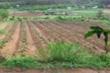 Miễn thuế sử dụng đất nông nghiệp đến 2025 nhưng phải minh bạch