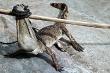 Nhiều người dân vây bắt cá sấu xổng chuồng ở Quảng Nam