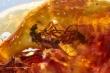 Tìm thấy mảnh hổ phách lưu lại cuộc giao phối của ruồi cách đây 40 triệu năm
