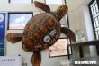 Hành trình độc đáo hồi sinh loài rùa khổng lồ quý hiếm của đại dương ở Cù Lao Chàm
