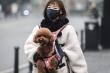 Hong Kong: Phát hiện trường hợp chó 'dương tính yếu' với Covid-19