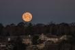 Ấn tượng hình ảnh 'siêu trăng giun' trên khắp thế giới