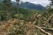 Khởi tố vụ án phá rừng phòng hộ ở Lâm Đồng