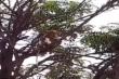 Đàn khỉ tấn công nhân viên phòng thí nghiệm, cướp mẫu xét nghiệm COVID-19