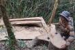 Khởi tố nhóm lâm tặc phá rừng đặc dụng Nam Kar