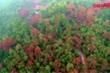 Đẹp sửng sốt rừng phong lá đỏ quanh chùa cổ ở Hải Dương