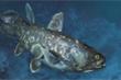 Cá 4 chân tuyệt chủng 420 triệu năm bất ngờ tái xuất