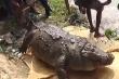 Cá sấu béo phì chết vì ăn gà, dê cúng tế