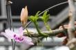 Lời khai của chủ vườn lan đột biến bị tố ôm trăm tỷ bỏ trốn