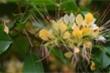 Ảnh: Mùa hoa bún nở rộ bên dòng sông Kiến Giang