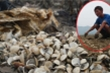 Ngao chết hàng loạt sau lũ, người Hà Tĩnh điêu đứng nhìn hàng chục tỷ đồng bốc hơi
