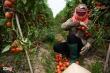 Bộ Nông nghiệp kêu gọi gỡ khó cho tiêu thụ nông sản giữa đại dịch