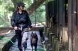 'Bóng hồng duy nhất' huấn luyện cảnh khuyển của Bộ tư lệnh Cảnh sát cơ động
