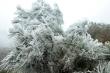 Ảnh: Huyện biên giới Bình Liêu đẹp mê đắm trong băng tuyết