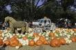 Độc đáo ngôi làng bí ngô cổ tích mùa lễ hội Halloween