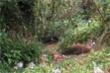Chạy trốn khi công an vây ráp trường gà, một thanh niên chết trong rừng