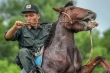 Xem cảnh sát cơ động thuần hóa ngựa chiến bất kham