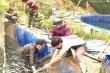 250 tấn cá hồi ở Lào Cai chưa thể bán