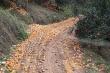 Hơn 8.000 tấn cam sành tại Hà Giang bị rụng