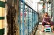 Video: Người dân 'bán mạng', sống trong chung cư nứt toác, sắp sập tại TP.HCM
