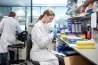 Sẽ có vaccine chống COVID-19 vào tháng 9?