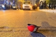 Bị xe buýt cán chết sau va chạm ô tô ở Hà Nội: Xác định danh tính nạn nhân