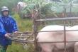 Hồ Kẻ Gỗ tăng lưu lượng xả tràn, người Hà Tĩnh ôm gà, lợn chạy lũ