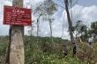 Rừng ở Đắk Nông bị 'cạo trọc'