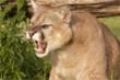 Người phụ nữ dũng cảm cạy miệng sư tử cứu cún cưng