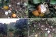Vườn cam 7.000 gốc của vợ chồng nông dân Hòa Bình bị phá hoại giữa ban ngày