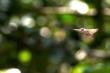 Video: Cận cảnh cú nhảy 30m của loài thằn lằn tự bay duy nhất trên thế giới