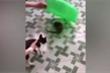 Clip: Mèo sợ 'chạy mất dép' khi nhìn thấy chuột