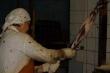 Khủng khiếp hình ảnh bên trong các trại lột lông thú tại Nga và Trung Quốc