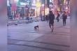 Clip: Chú chó tha dép chạy vòng quanh trêu đùa chủ