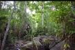 Phát hiện thi thể người đang phân huỷ trong rừng ở Khánh Hoà