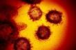 Virus corona đang được tìm kiếm nhiều hơn cả sex