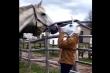Đang 'tán gái', ngựa giật mình bỏ chạy khi biết sự thật về 'nàng'