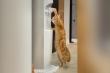 Chú mèo thông minh uống nước ở máy lọc