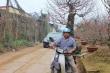 Dịch vụ chở hoa, cây cảnh Tết: Kiếm vài chục triệu không khó