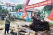 Chặt cây đang tươi tốt, trường học ở Nghệ An bị kiểm điểm