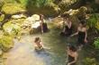 Kỳ lạ con suối chảy qua rừng già có khả năng biến nhiệt ở Mộc Châu