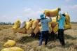 Lùm xùm xuất khẩu gạo: Uỷ ban Kinh tế Quốc hội đề nghị truy trách nhiệm